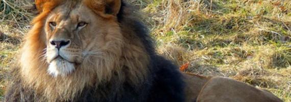 wuppertaler zoo eintrittspreis